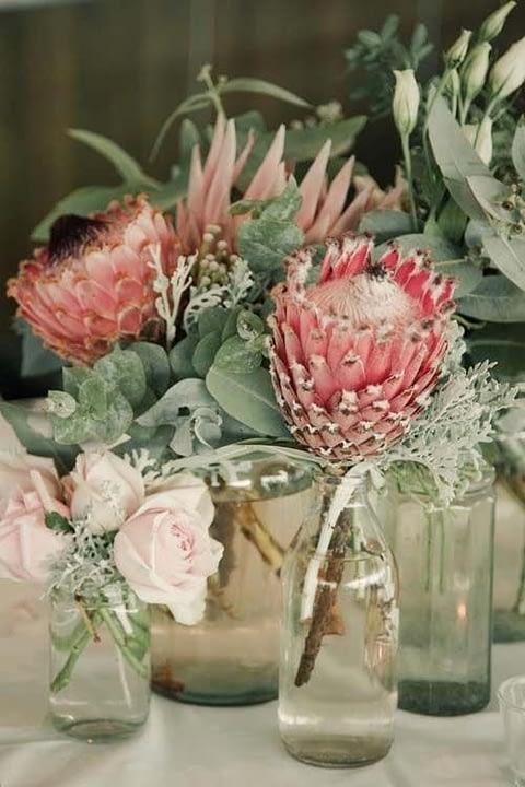 July-Protea