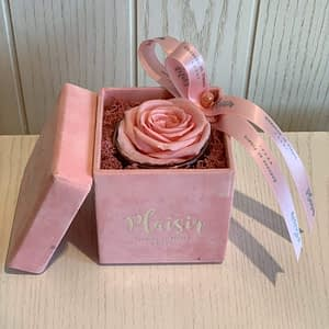 Petite Single Pink Square & Pink Infinity Rose