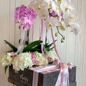 VIP Garden of Orchids with chocolates