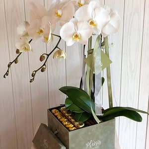 Chocobox Olive with White Orchids