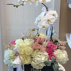 VIP Orchids full floral