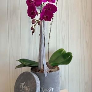 Purple on Grey_Orchid
