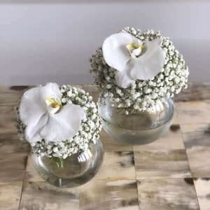 Gypso - Orchid Twins
