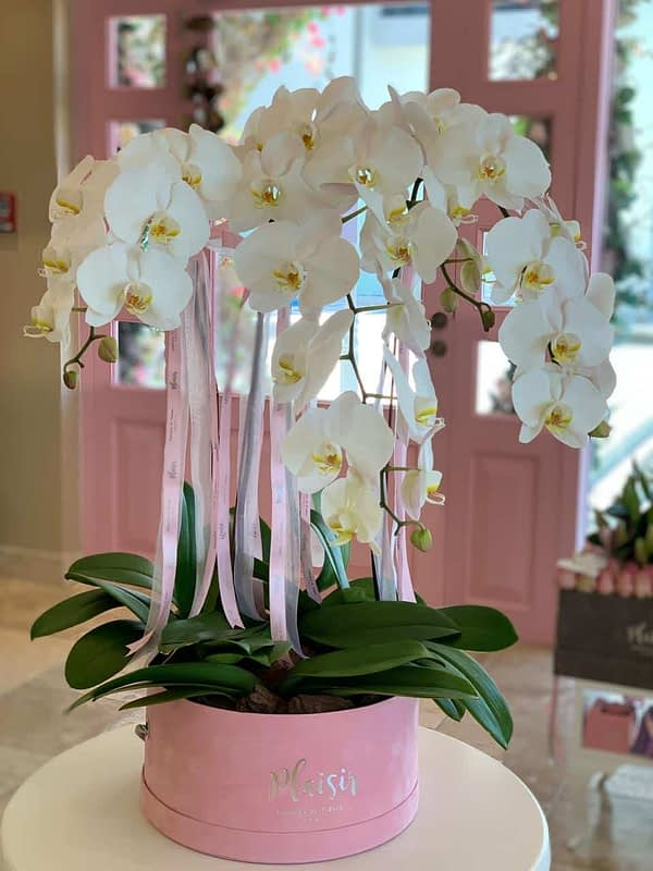 White Orchids in Pink Hatbox