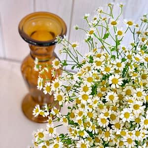 Hand tied Camomile