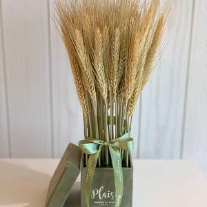 Petite Olive Square Natural Wheat Box