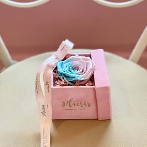 Candy-lane Single Infinity in Pink Box