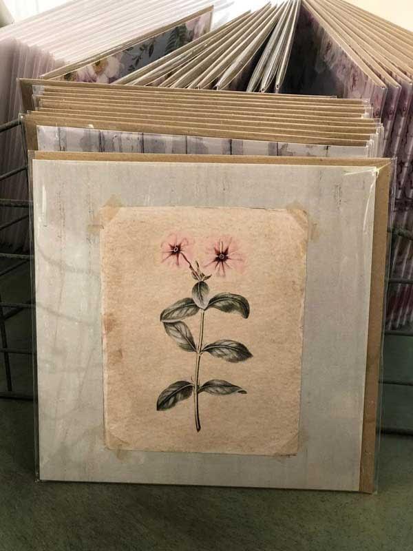 Blank – Anemone